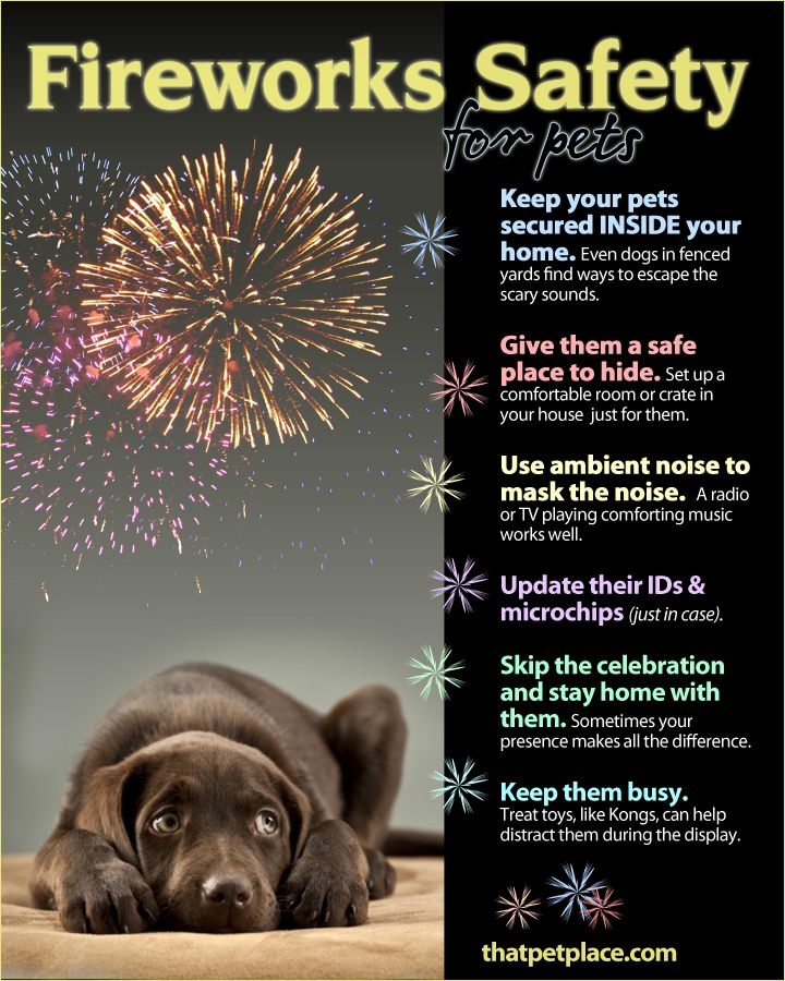 5d94b42b9a6bd999dda8995ce041a843--firework-safety-cute-animal-pictures