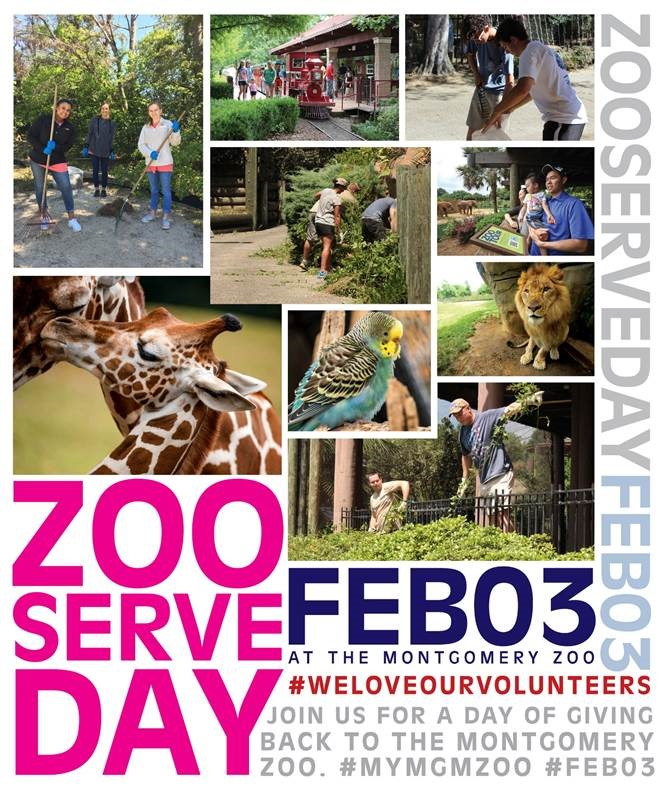 Zoo Serve Day 2018